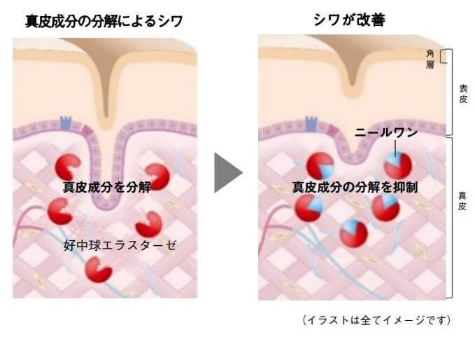 Wrinkle_mechanism