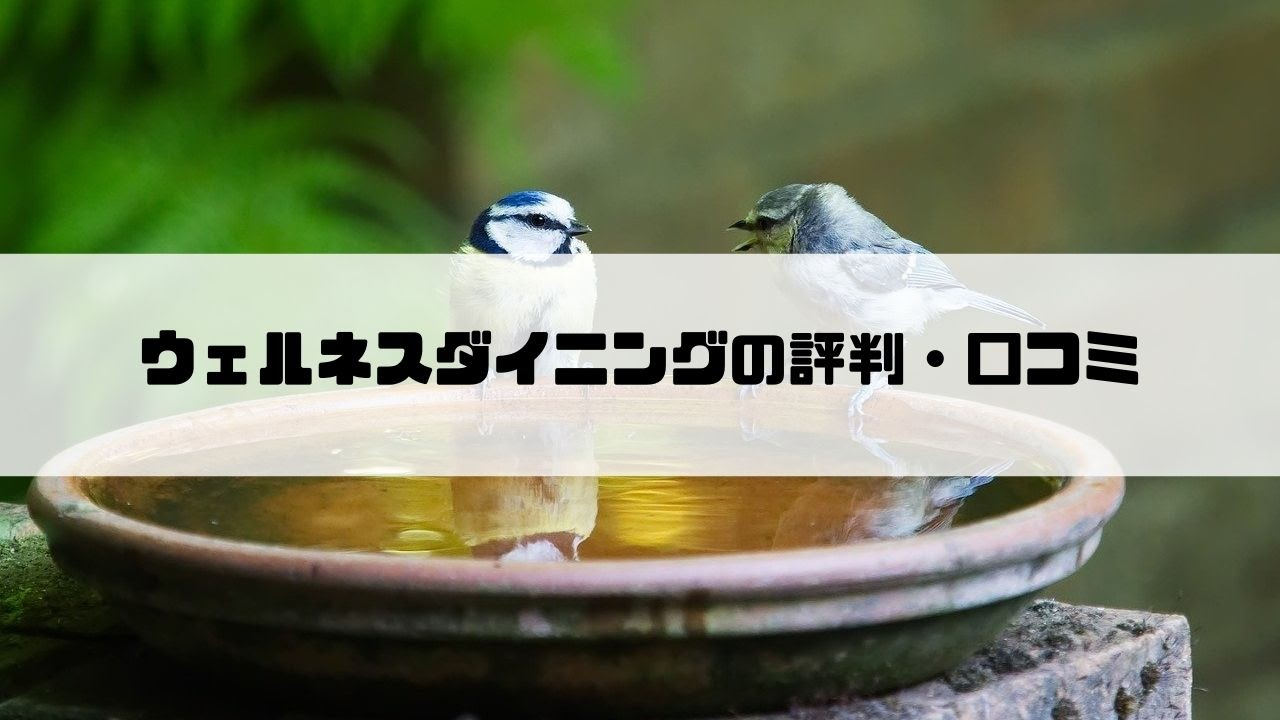ウェルネス_評判